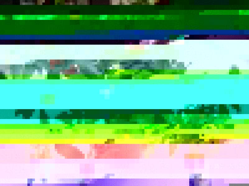 Растение Паслен